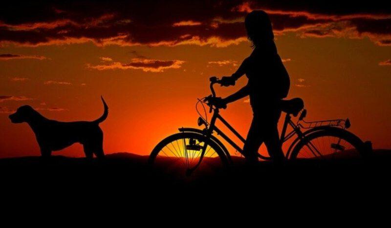 Jakie jest obowiązkowe wyposażenie roweru?